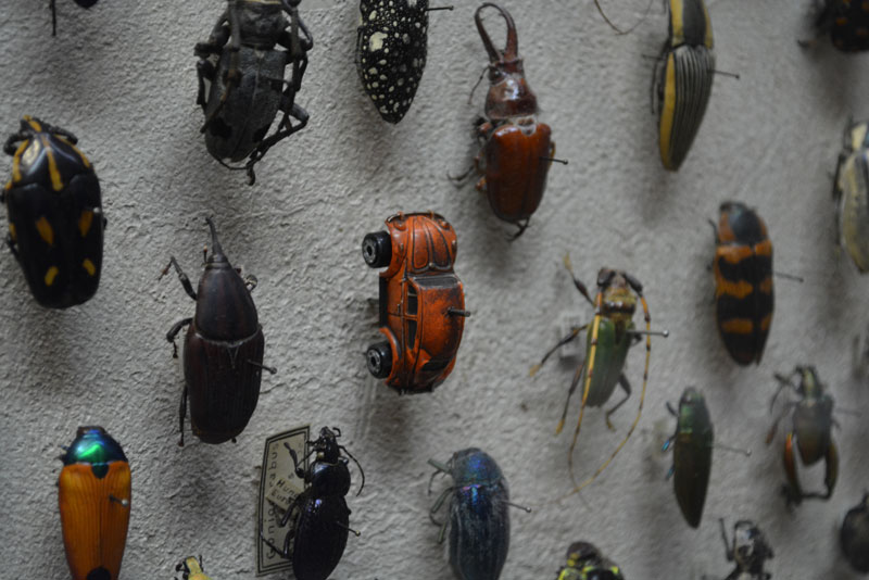 vw beetle bug at the cleveland museum of natural history beetle display exhibit Picture of the Day: Meanwhile at a Cleveland Museums Insect Exhibit