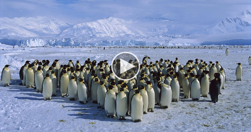 Who Actually Owns Antarctica?