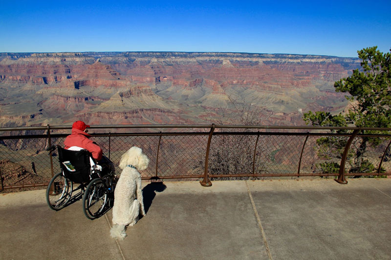 90-Year-Old Woman Chooses Epic Road Trip With Family Over Cancer Treatment (14)