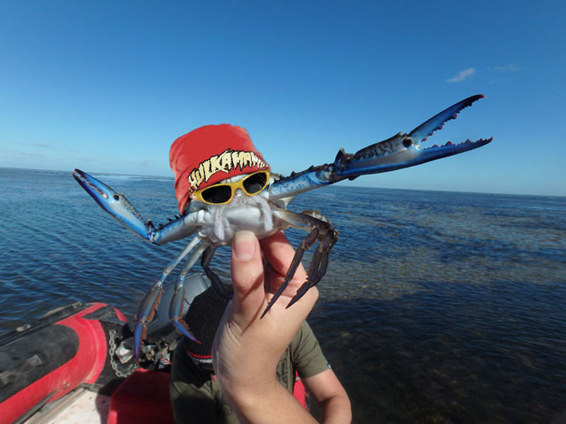 can you photoshop this blue crab showing off its claws (11)