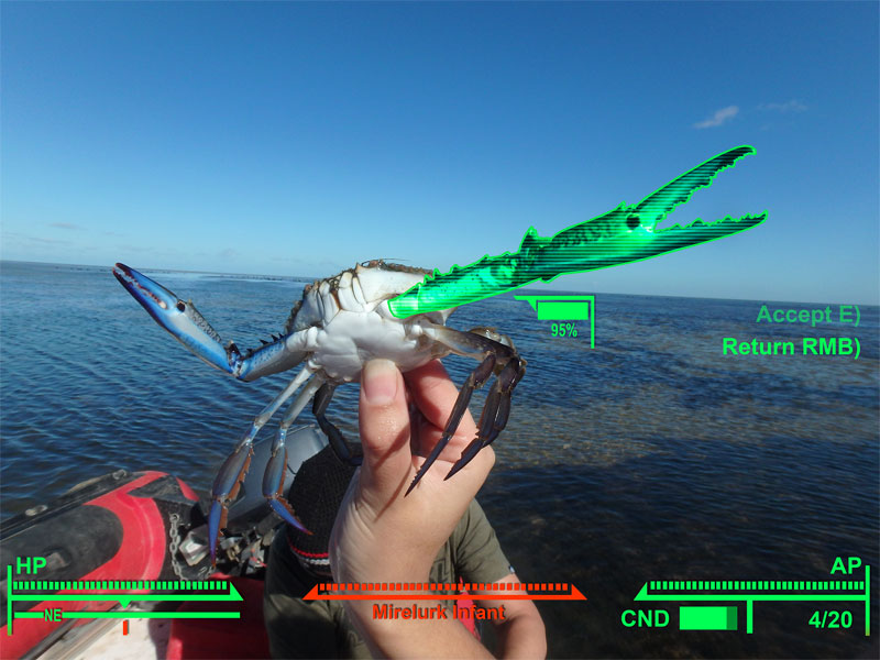 can you photoshop this blue crab showing off its claws (2)