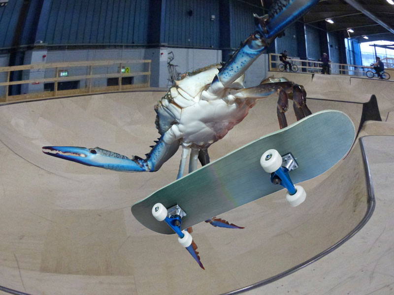 can you photoshop this blue crab showing off its claws (20)