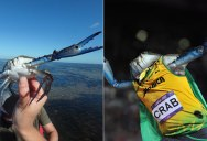 Can You Photoshop This Blue Crab Showing Off His Claws? (21 Photos)