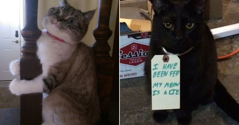 cats gonna cat The Shirk Report – Volume 358