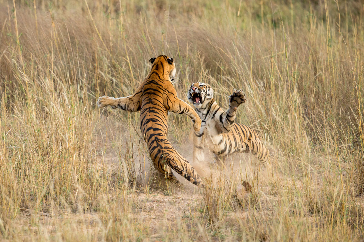 Credit-Archna-Singh