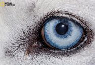 Inside the Eye: Nature's Most Exquisite Creation (10 Photos)