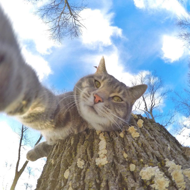 manny the cat takes better selfies than you (1)