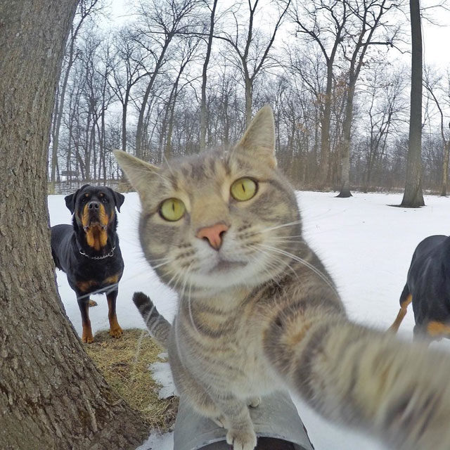 manny the cat takes better selfies than you (11)