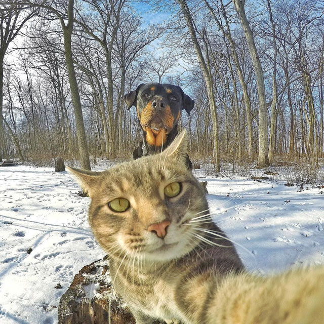 manny the cat takes better selfies than you (12)