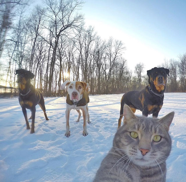manny the cat takes better selfies than you (13)