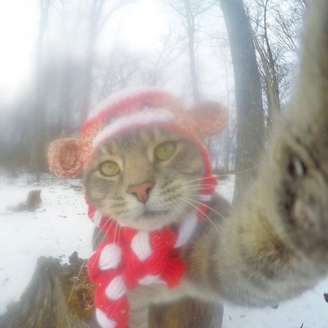 manny the cat takes better selfies than you (15)