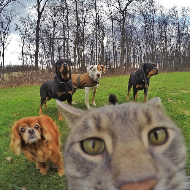 manny the cat takes better selfies than you (6)
