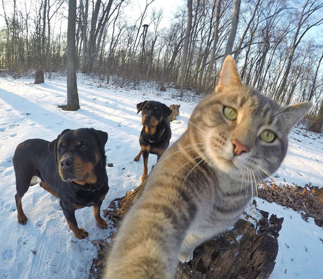 manny the cat takes better selfies than you (7)