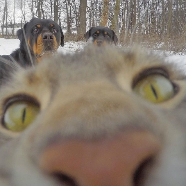 manny the cat takes better selfies than you (9)