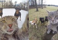 This Cat Takes Better Selfies Than You (16 Photos)