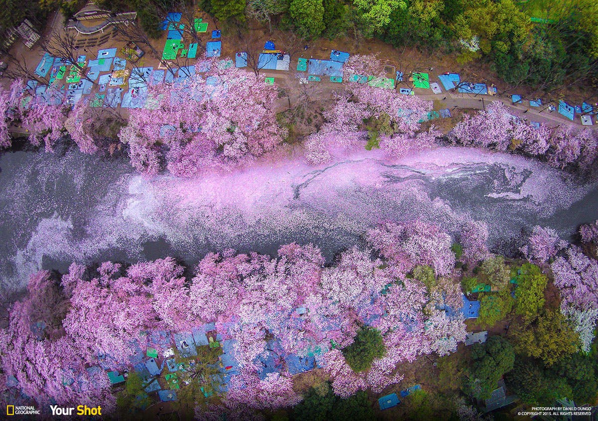 01 Spring Has Sprung! And In Japan, That Means Cherry Blossoms (8 photos)