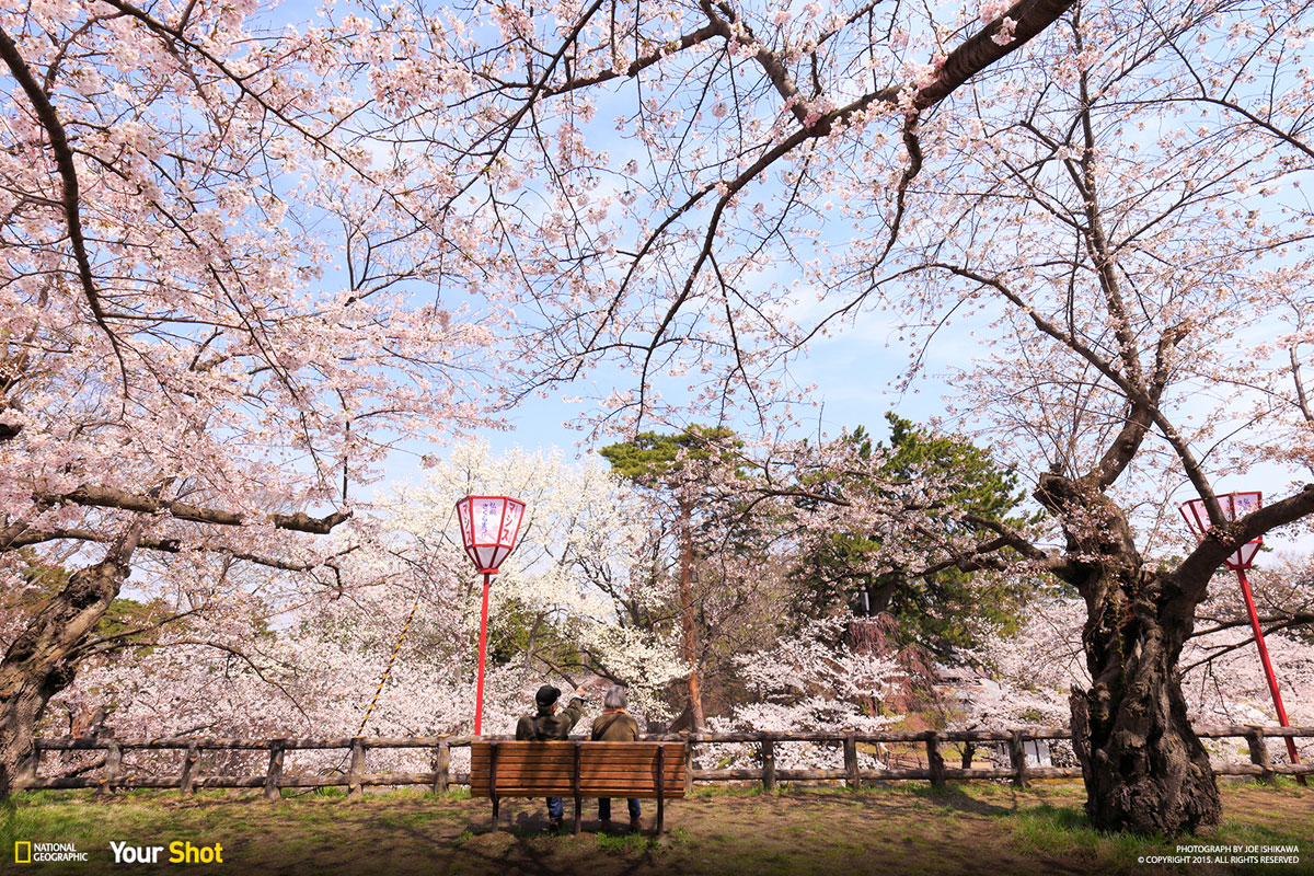 07 Spring Has Sprung! And In Japan, That Means Cherry Blossoms (8 photos)