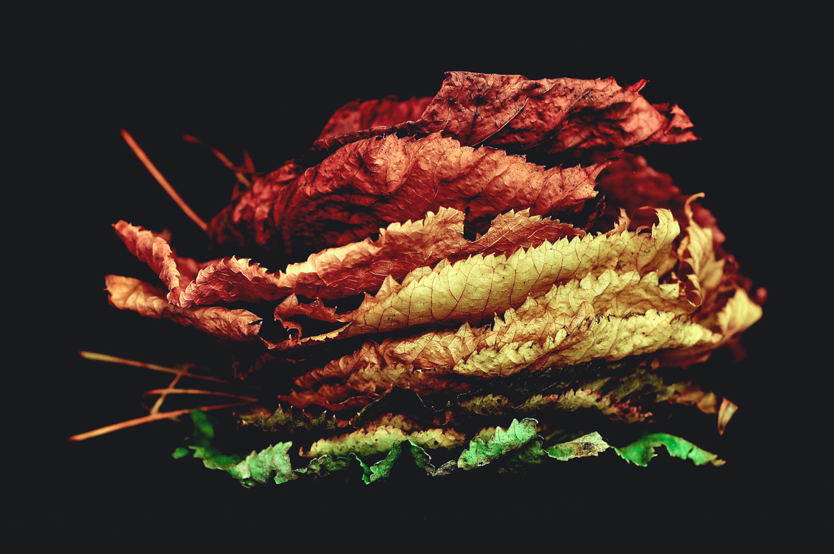 autumn sandwich various colored leaves stacked davide ragusa Picture of the Day: Autumn Sandwich
