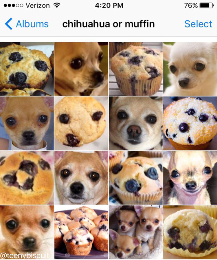chihuahua or muffin by karen zack