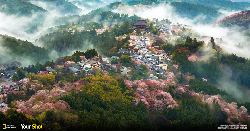 Spring Has Sprung! And In Japan, That Means Cherry Blossoms (8 photos)