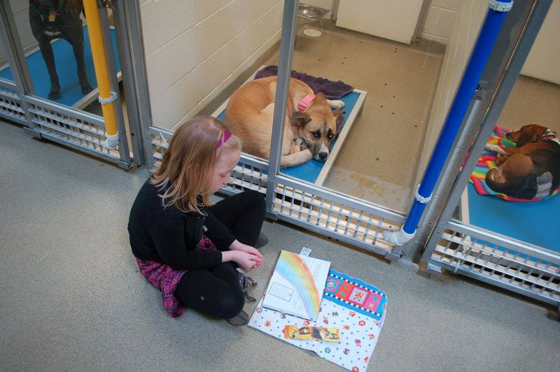 New Program Lets Kids Practice Reading While Shy Shelter Dogs Learn to Socialize (8)