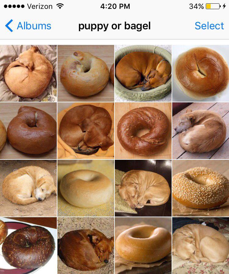 puppy or bagel by karen zack
