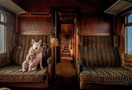 The Winners of Smithsonian's 13th Annual Photo Contest (9 Photos)