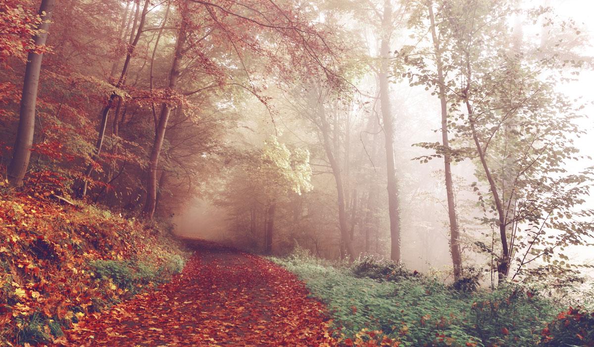 autumn bad pyrmont germany by sebastian unrau