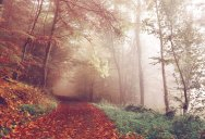 Picture of the Day: Autumn Walks in Bad Pyrmont, Germany