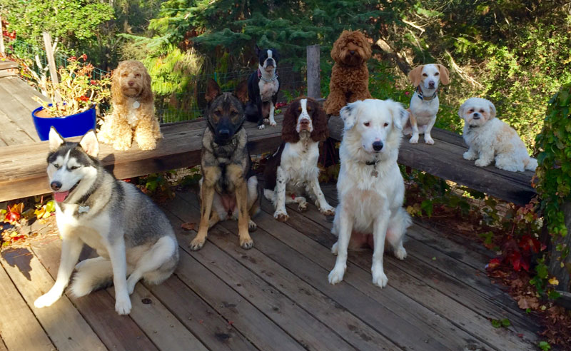 Dog Walker Takes Daily Pack Pics for the Owners by walkpro leash (2)