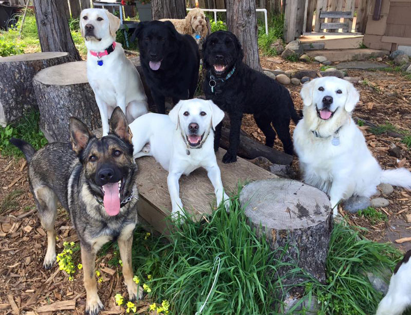 Dog Walker Takes Daily Pack Pics for the Owners by walkpro leash (22)