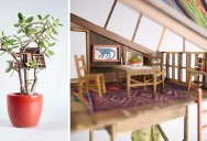 Miniature Treehouses for House Plants Because Why Not