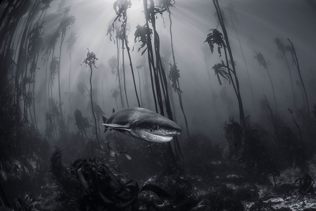 081 The 2016 National Geographic Travel Photographer of the Year Contest (15 Photos)