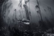 The 2016 National Geographic Travel Photographer of the Year Contest (15 Photos)