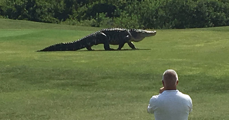 The Internet Can't Decide if this Giant Gator Video is Real or Fake