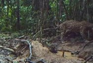 Guy Sets Remote Camera Deep in the Amazon and Captures the Rainforest's Incredible Biodiversity