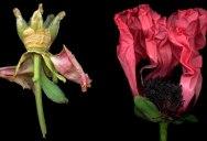 Isabel Bannerman's Stunning Flower Photos Border on Violence