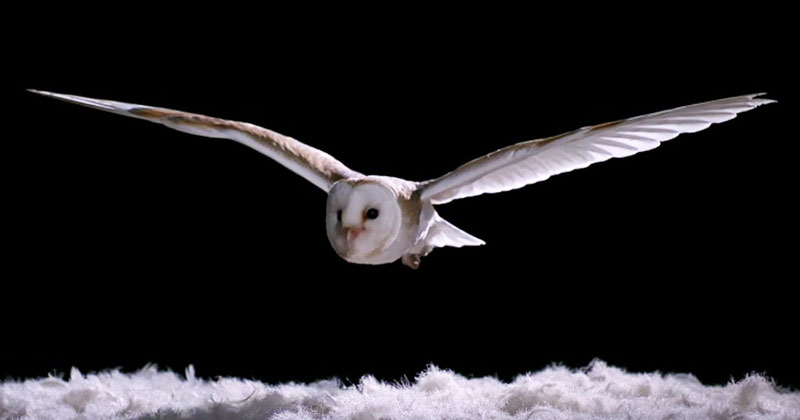 Watch How Silently Owls Fly Compared to Other Birds