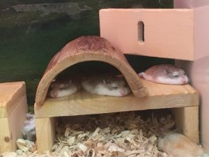 hamster pancakes1 HAMSTER PANCAKES