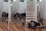 Boston Dynamics Just Made Their Newest Robot Wipe Out on a Banana Peel