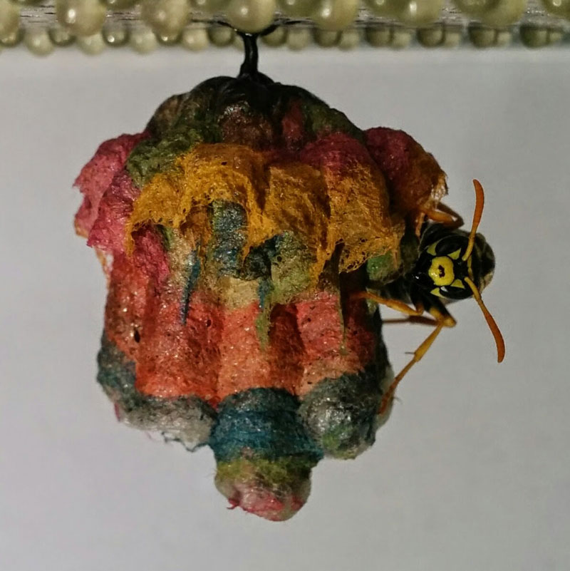 wasps use colored paper to make rainbow colored nests (5)
