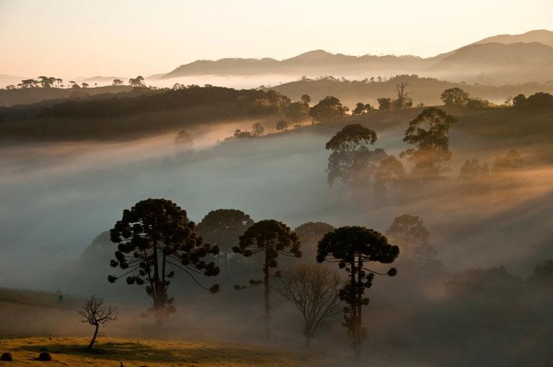 Araucárias_ao_fundo_Parque_Nacional_da_Serra_da_Bocaina_-_denoise