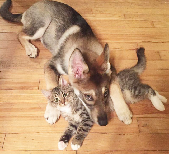 dog picks kitten out of shelter raven and woodhouse instagram (1)