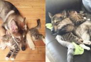 Couple Lets Their Dog Pick Out a Kitten at the Shelter and Now They're Besties