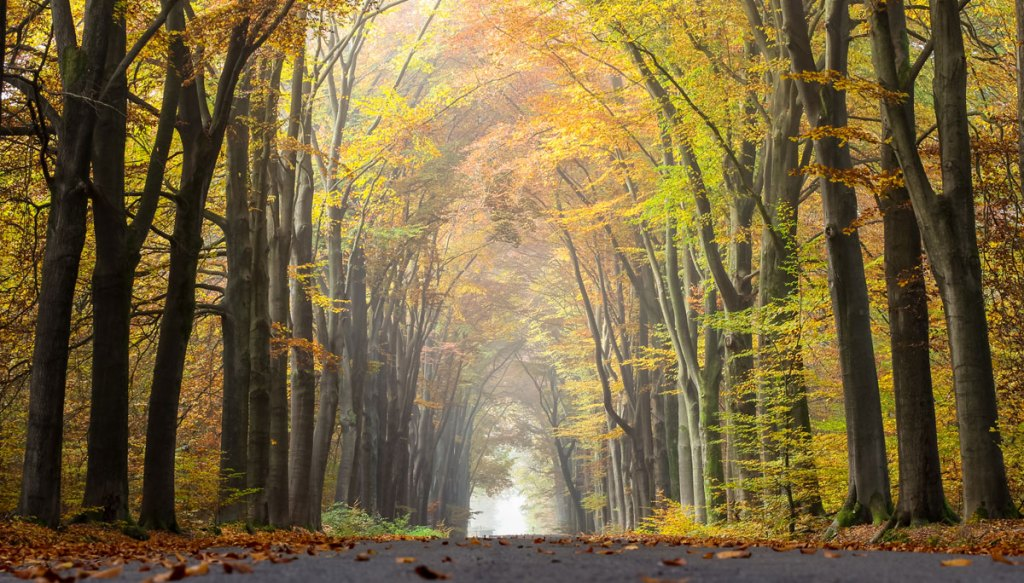 Picture of the Day: Long Talks and Autumn Walks
