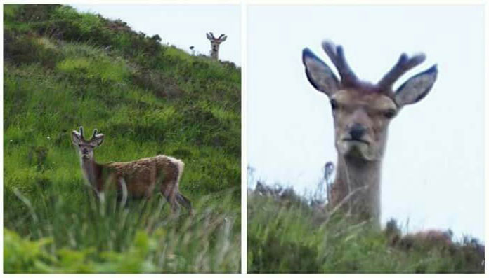 furious deer2 The Shirk Report – Volume 376