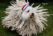 Picture of the Day: Not Sure If Dog or Mop