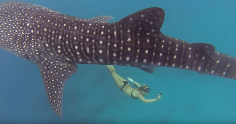 I Want to Swim with Whale Sharks
