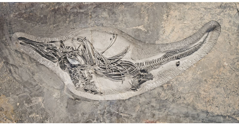 Picture of the Day: Over 242 Million Years Old