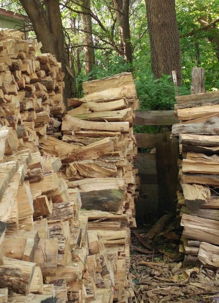 hidden cat wood pile logs (1)